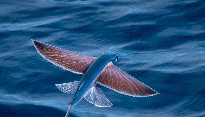 Ocean did you see the fish fly?